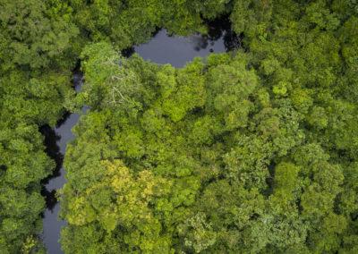 Projet d'appui à la politique nationale de conservation et getsion de la forêt et de la biodiversité