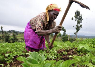 Environnement et agriculture durable pour la sauvegarde des sites biologiques prioritaires de la RDC