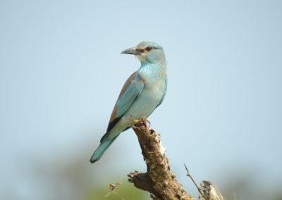 Conservation des ressources naturelles et développement durable du Complexe des aires protégées de la Garamba