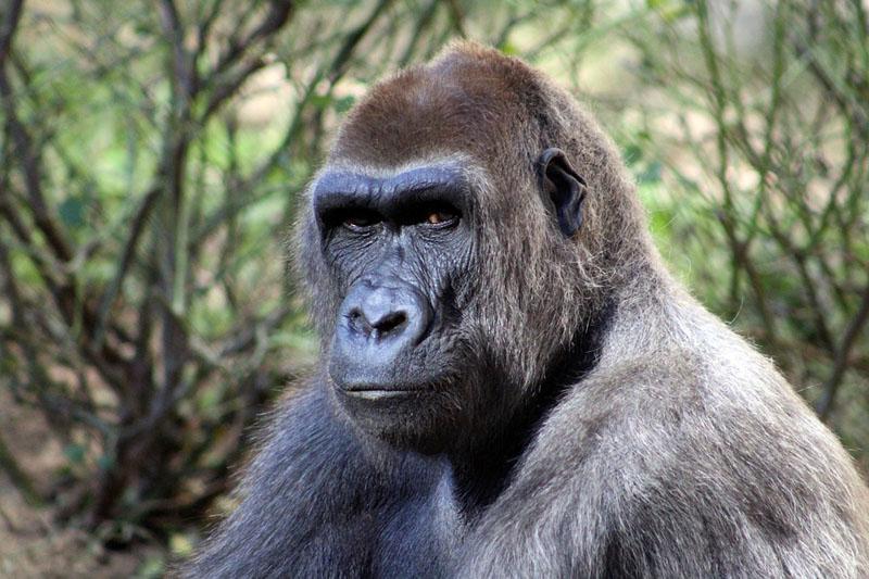 Projet agriculture et développement économique en périphérie du parc national des Virunga