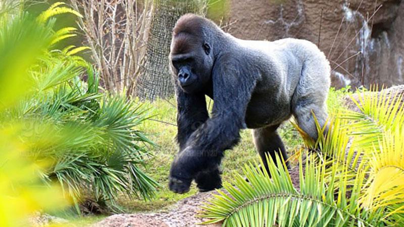 Restauration des écosystèmes du parc national des Virunga et valorisation durable de ses ressources naturelles