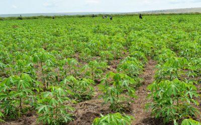 Deuxième comité de pilotage du programme Environnement et Agriculture durable